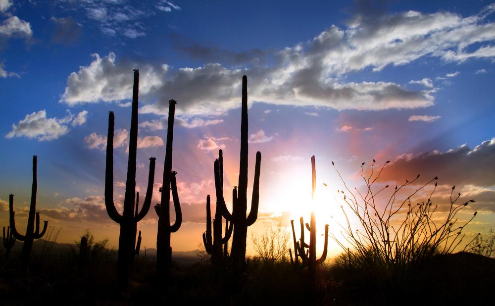 tucson-suguaro-sunset